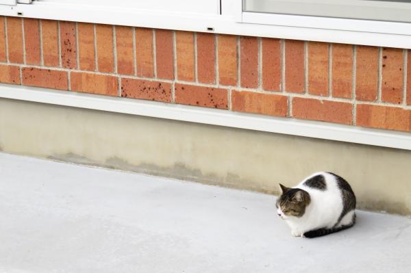 犬走りでくつろぐ猫