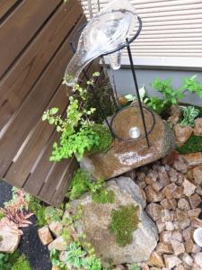 雨に濡れる石と苔